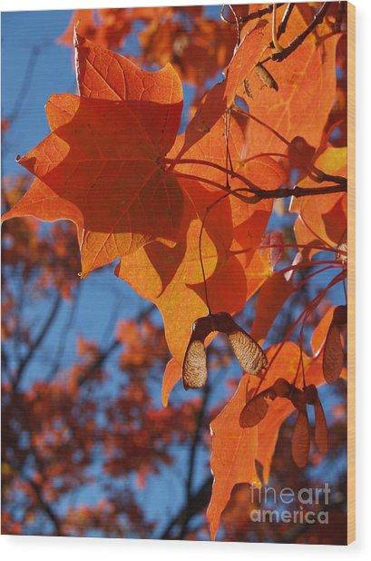Backlit Orange Sugar Maple Leaves Wood Print