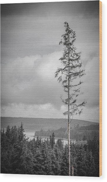 Tall Tree View Wood Print
