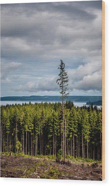 Logging Road Ocean View  Wood Print