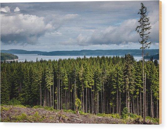 Logging Road Landscape Wood Print