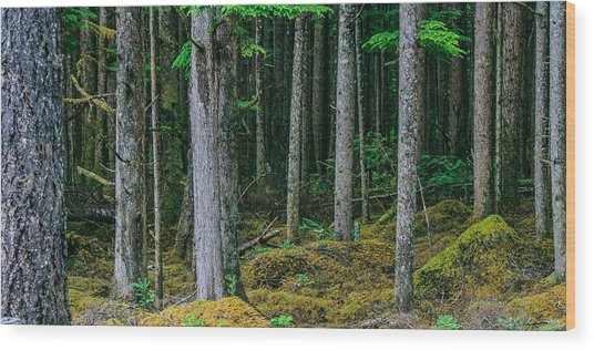 Inside View Backroad Forest Wood Print