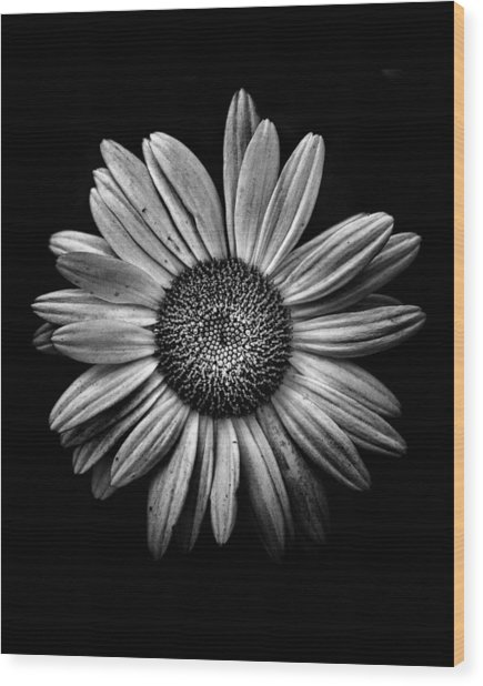 Backyard Flowers In Black And White 13 Wood Print