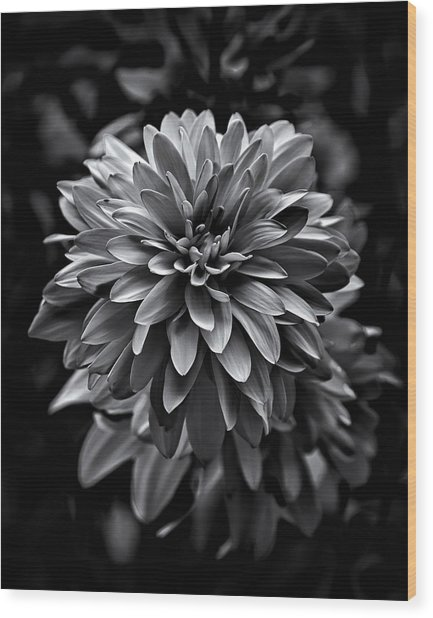 Backyard Flowers In Black And White 15 Wood Print