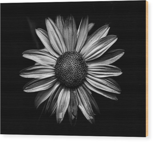 Backyard Flowers In Black And White 18 Wood Print