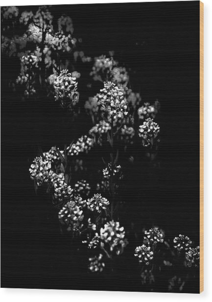 Backyard Flowers In Black And White 33 Wood Print