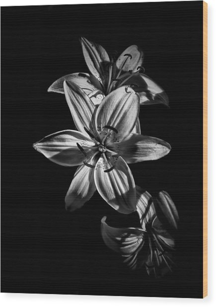 Backyard Flowers In Black And White 9 Wood Print