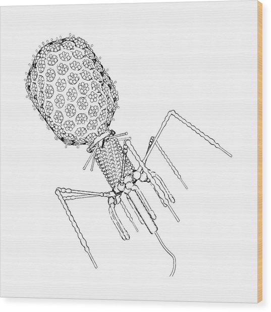Bacteriophage T4 Wood Print