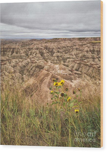 Badlands Wild Sunflowers Wood Print