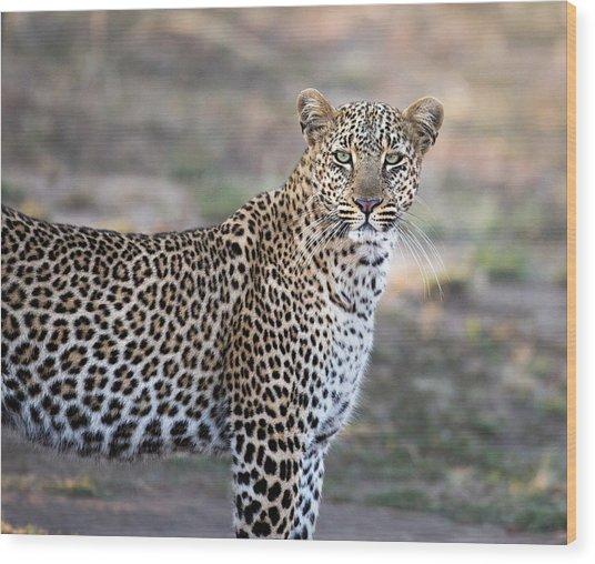 Bahati The Leopard In The Masai Mara Wood Print