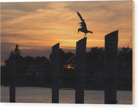 Balance - A Seagull Sunset Silhouette Wood Print