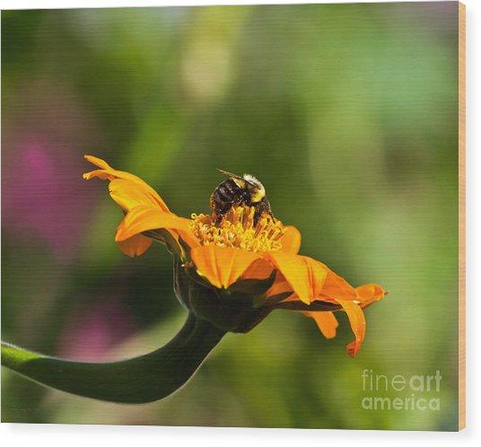 Balancing Bumblebee Wood Print