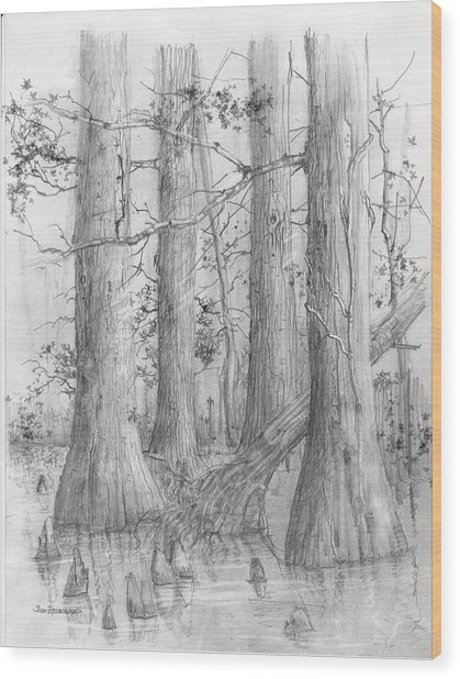 Bald Cypress Wood Print