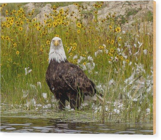 Bald Eagle @ Lunch  Wood Print