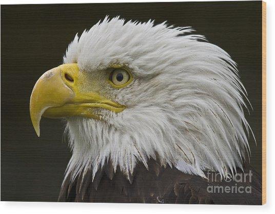 Bald Eagle - 7 Wood Print