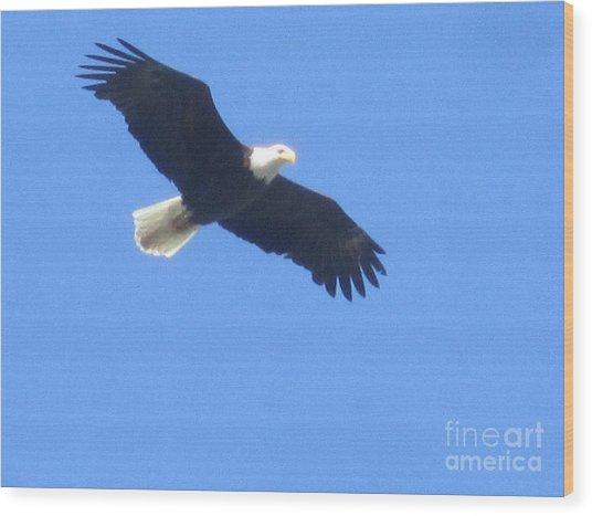 Bald Eagle At Lake Rowena Wood Print