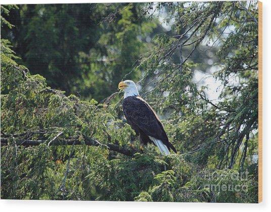 Bald Eagle Wood Print by Kathy Eastmond