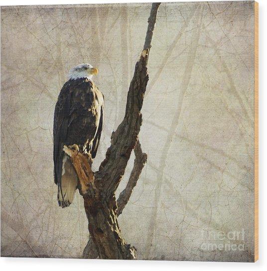 Bald Eagle Keeping Watch In Illinois Wood Print