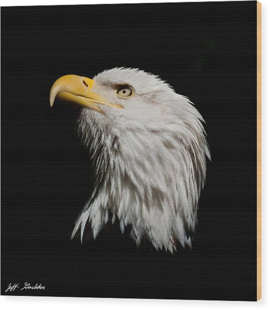 Bald Eagle Looking Skyward Wood Print