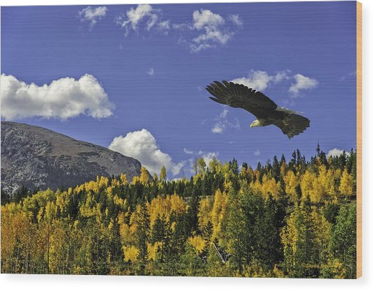 Bald Eagle Over The Aspen Wood Print