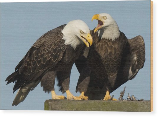 Bald Eagle Pair Wood Print