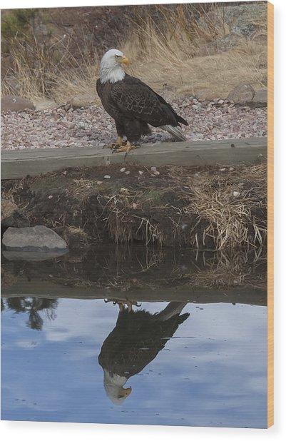 Bald Eagle Reflection Wood Print