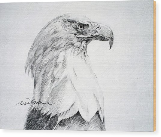 Bald Eagle Wood Print by Ron Wilson