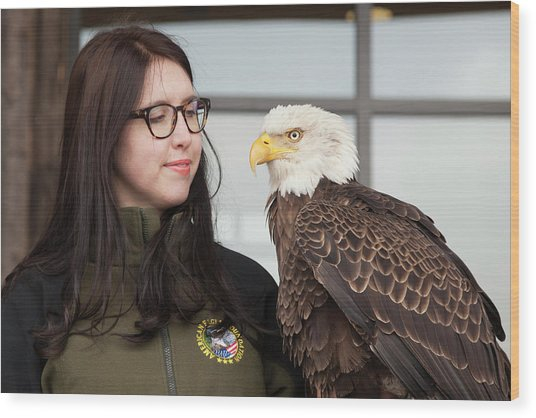 Bald Eagle With Handler Wood Print by Jim West