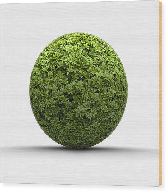 Ball Of Leaves Wood Print by Jorg Greuel