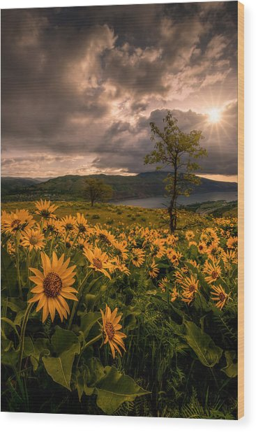 Balsamroot Heaven Wood Print