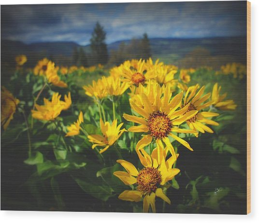 Balsamroot Of The Gorge Wood Print