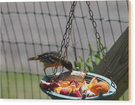 Baltimore Oriole Fruitplate Wood Print by Margo Miller