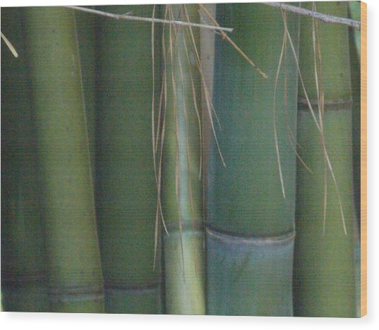 Bamboo 3 Wood Print