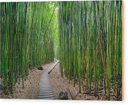 Bamboo Brilliance Wood Print