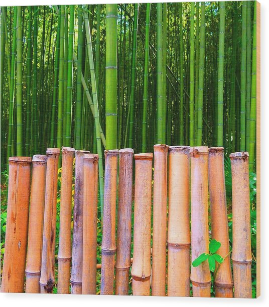 Bamboo Fence Wood Print