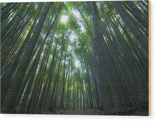 Bamboo Forest Wood Print by Aaron Bedell