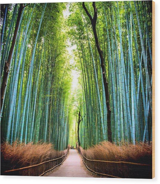 Bamboo Forest Wood Print by James Kang / Eyeem