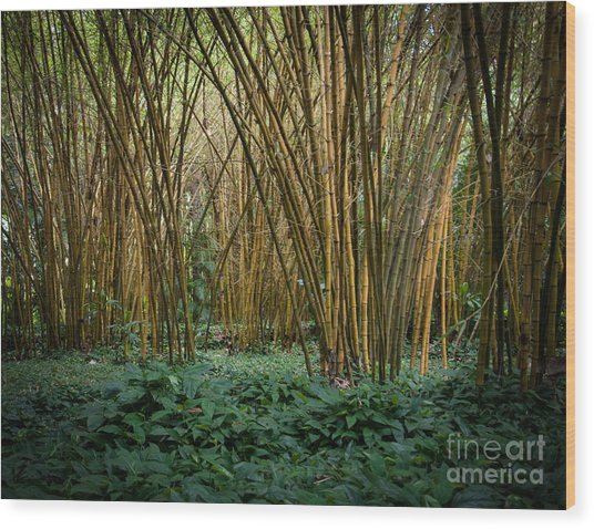 Bamboo Grove Wood Print