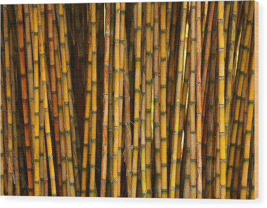 Bamboo Wood Print by Jacqui Collett