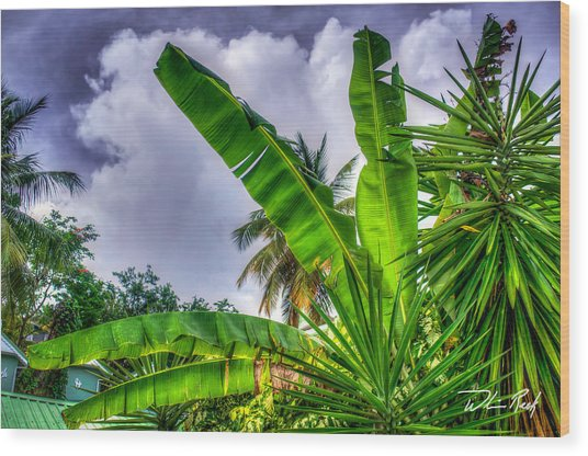 Banana Fan Wood Print by William Reek
