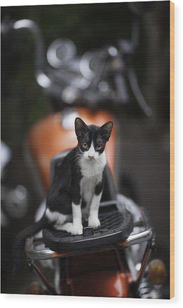 Bangkok Cat Wood Print by David Longstreath