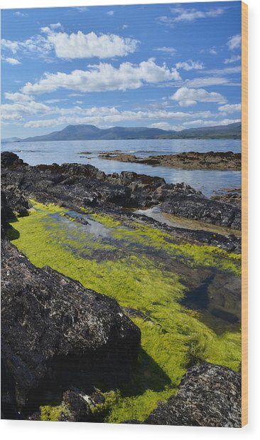 Bantry Bay In August Wood Print by Phil Darby