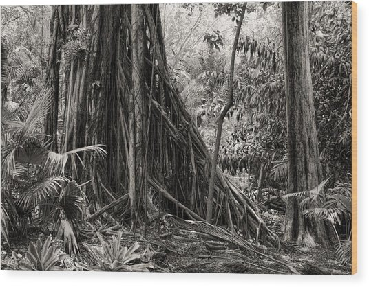 Strangler Fig And Cypress Tree Wood Print