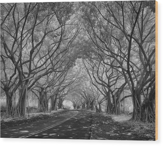 Banyan Tree Lined Road Wood Print