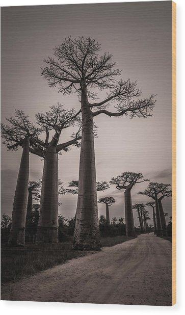 Baobab Avenue Wood Print