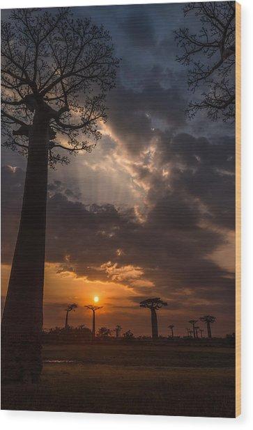 Baobab Sunrays Wood Print