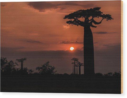 Baobab Sunrise Wood Print