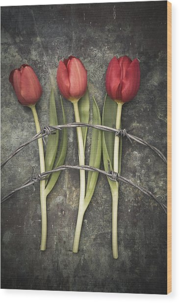 Barbed Wire And Tulip Wood Print