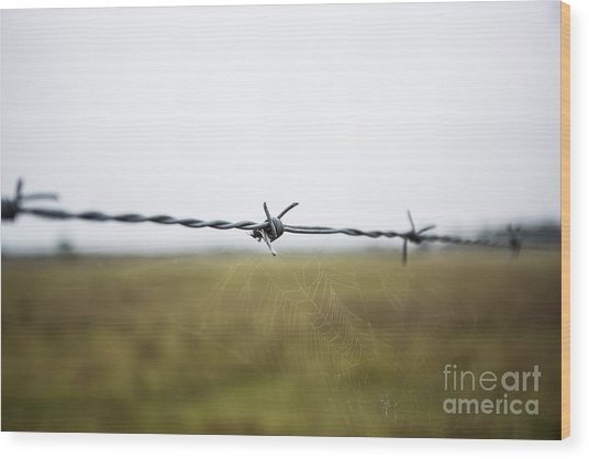 Barbed Wires Wood Print by Mina Isaac