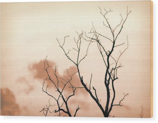 Bare Limbs Wood Print