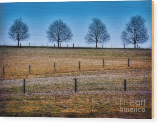 Bare Trees And Fence Posts Wood Print